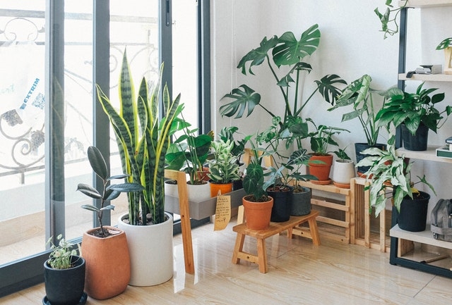 Health Benefits of Indoor Plants That You Should Know